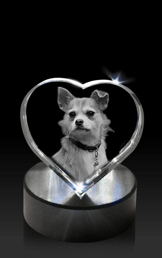 B-LED-sokkel-Hart-hond-op-ronde-kln