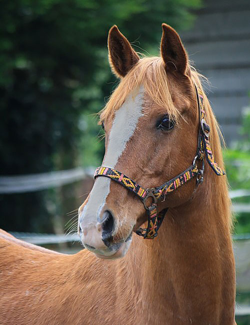 Paard-01