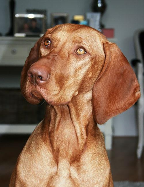 hond-01b-02