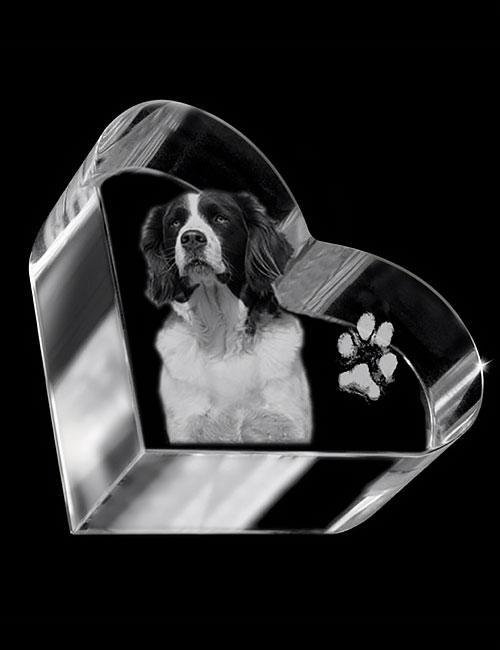 hond-04b-02